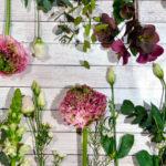 Pas på dine blomster og planter